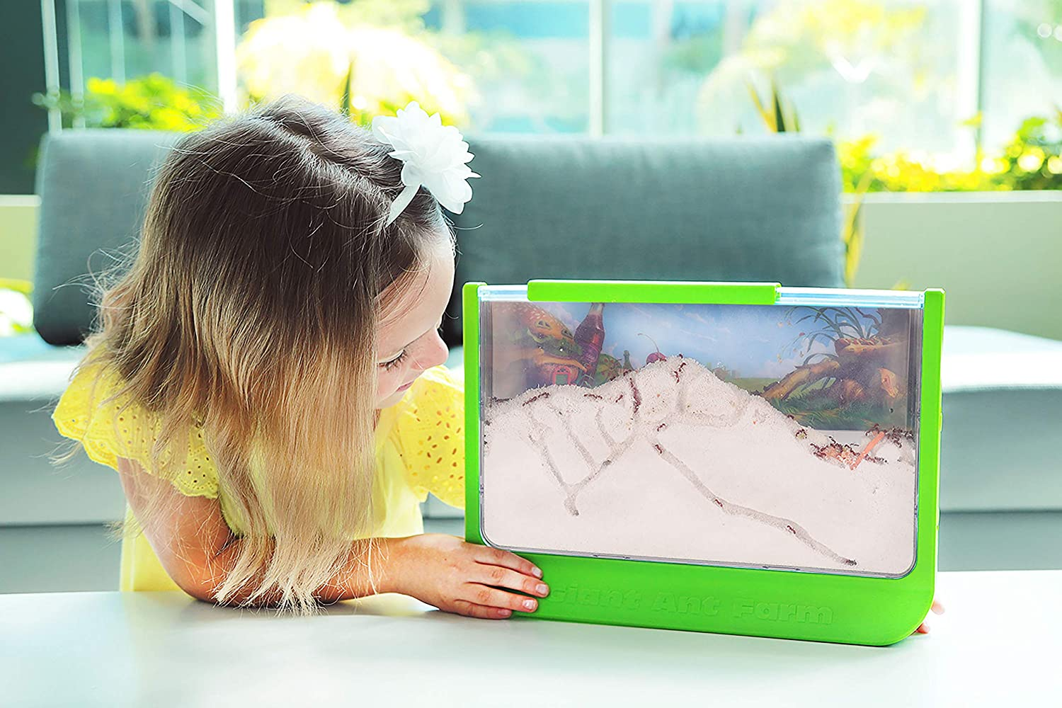 Read more about the article 4 BEST Ant Farms For Kids in 2021